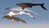 Mosasaur prehistoric marine reptiles