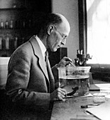 Ross Harrison,US biologist