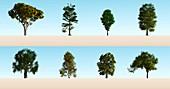 Hardwood trees,illustration