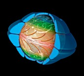 Artwork of global air circulation