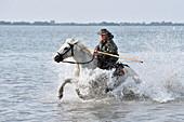 Camargue cowboy,France