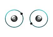 Bond formation in hydrogen molecule