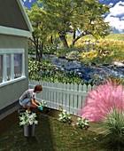 Non-invasive garden plants,illustration