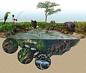 Hippopotamus ecological impact,artwork
