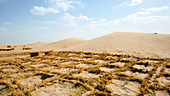 Desertification prevention,China