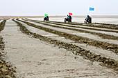 Desertification prevention,China