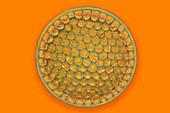 Fossil diatom,light micrograph