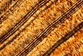 Agate,polarised light micrograph