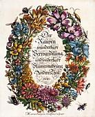 1683 Maria Sybella Merian Metamorphosis