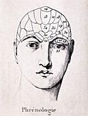 1838 Phrenology Diagram of head