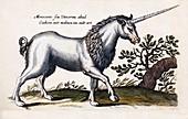 1657 Merian Unicorns monoceros