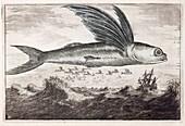 1693 Flying fish Johan Nieuhof
