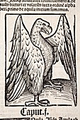 1491 Eagle from Hortus Sanitatis