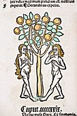 1491 Adam and Eve tree Hortus Sanitatis