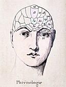 1838 Tinted Phrenological head