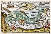 1582 Sawfish Pristis as sea unicorn