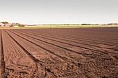Soil on a farm on the Lancashire mossland