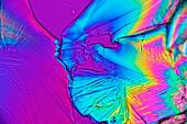 Citric acid crystals,light micrograph