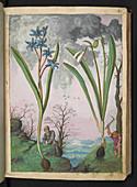 Medicinal plants,illustration