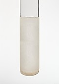 Test tube of silver chloride