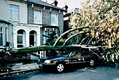 Gale damage in London,1987