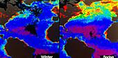 False-colour satellite images of Atlantic ocean