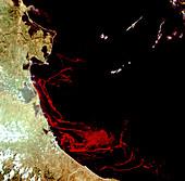 Algae carpet off coast of Italy,Landsat