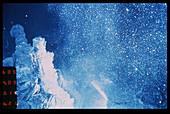 'Snow blower' hydrothermal vent
