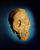 Taung skull