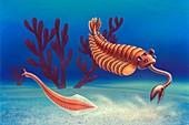 Cambrian animals,artwork