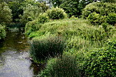 Riverbank habitat