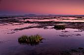 Mud flats at low tide