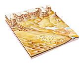 Desert features