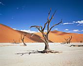 Dead Vlei desert pan
