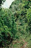 Jungle vegetation