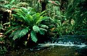Temperate rain forest vegetation