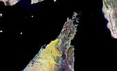 Musandam Peninsula,Oman,satellite image