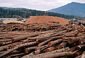 Piles of logs and sawdust at a sawmill