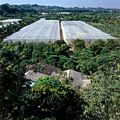 Fruit cultivation