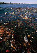 Rubish and debris on the River Potomac,Washington