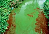 River pollution causing severe algal bloom