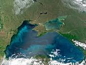 Algal blooms in the Black Sea