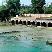 Algal bloom on river
