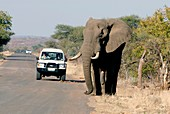 Elephant-watching