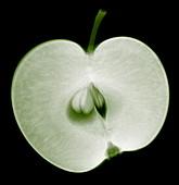 Apple half,X-ray