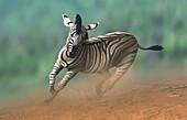 Artwork of a zebra galloping