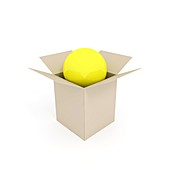 Ball in a box,artwork