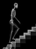 Skeleton walking up stairs,artwork