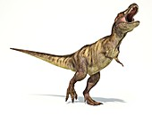 Tyrannosaurus rex dinosaur,artwork