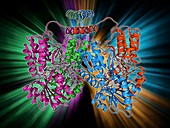 LAC repressor molecule